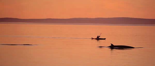 Kayak and Whale